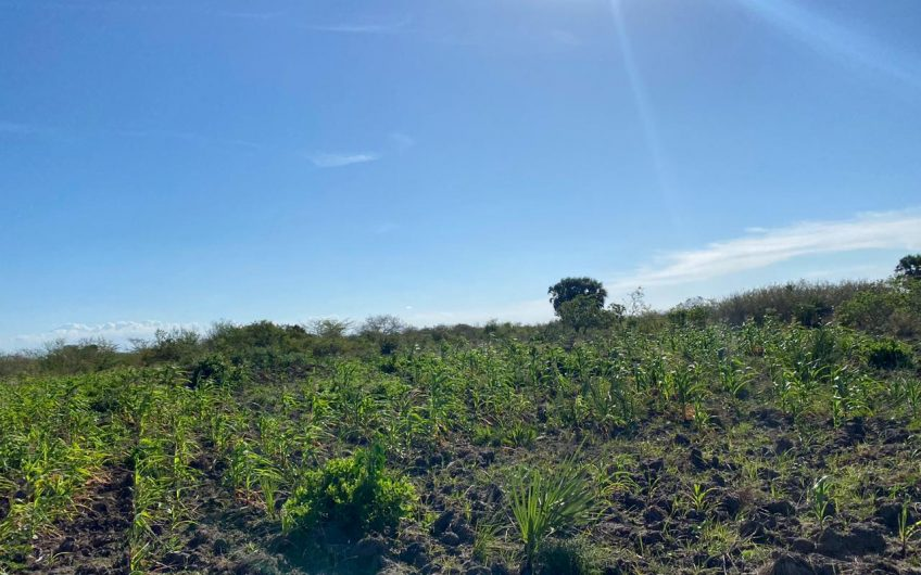 260 ACRES LAND FOR SALE IN LUNGA LUNGA.